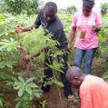 Indigenous agroforestry 'may improve livelihoods' - SciDev.Net | The Agrobiodiversity Grapevine | Scoop.it