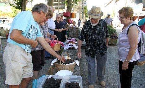 Beau marché aux truffes d'été | Actualités du tourisme lotois | La truffe dans tous ses états | Scoop.it