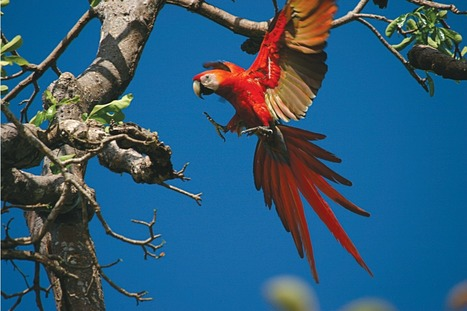 Audubon Ecotourism in Belize | Future, Past, Anthropology,Arts,Social Science,Research | Scoop.it