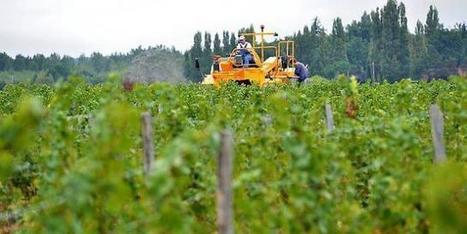 Maine-et-Loire : ce que pèse la viticulture biodynamique en Anjou - Ouest France Entreprises | Chimie verte et agroécologie | Scoop.it