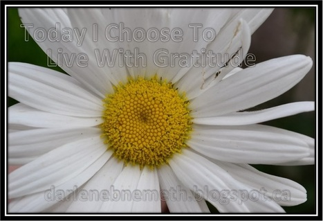 Darlene Nemeth: Today I Choose To Live With Gratitude | Inspired to Live | Scoop.it