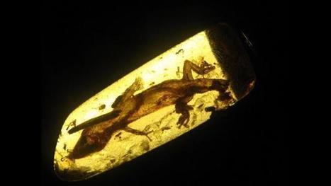 Impressive 23 Million-Year-Old Fossil Discovered - Wunderground.com (blog)   Kanchanz   Scoop.it