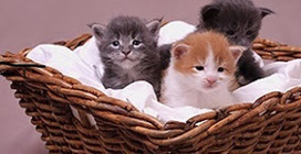 Buy Pet Products Online To Make Your Pet Perfect   Purchase Pet Supplies Online   Scoop.it