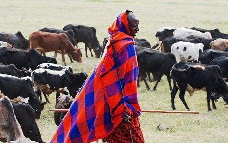 Emerging Diseases Threaten the Maasai People & Their Herds | African Business : Rebranding, Retailing  & Developing | Scoop.it