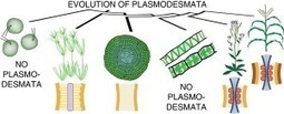 Plasmodesmata enable multicellularity: new insights into their evolution, biogenesis, and functions in development and immunity | Cereal and Biotrophic Pathogens | Scoop.it