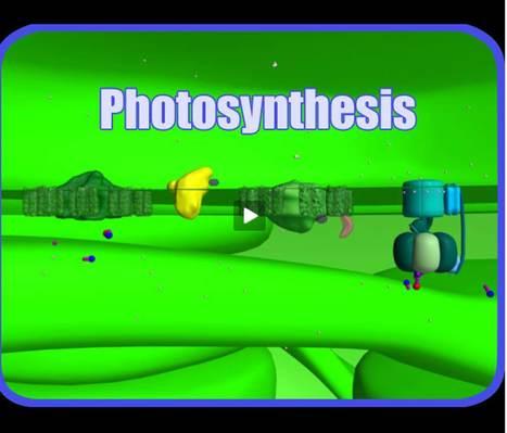 VCAC: Cellular Processes: Photosynthesis: The Movie | Biología de Cosas de Ciencias | Scoop.it
