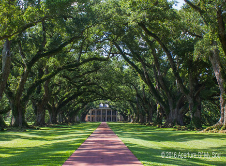 5 Epic Reasons You Should Want to Visit Louisiana | Oak Alley Plantation: Things to see! | Scoop.it