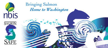 Expanding to urban Seattle: announcing UW, REI, Seattle Art Museum, PCC Natural Markets certifications | Salmon-Safe | Download Premium WordPress Theme Free | Scoop.it