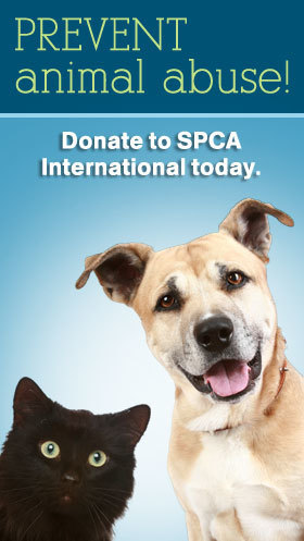 Animal Cruelty | Animal Cruelty | Scoop.it