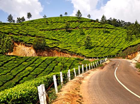 L'Inde prévoit de planter 2 milliards d'arbres, l'effet que cela aura est incroyable | The Blog's Revue by OlivierSC | Scoop.it