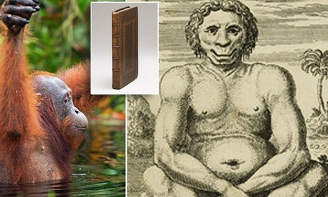 This strange creature is the first ever depiction of an orangutan | Skylarkers | Scoop.it
