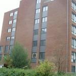 De Haarlemse School | Gierzwaluwen | Scoop.it