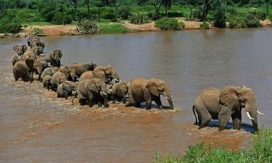 Ban Ki-moon to warn UN security council of dangers of wildlife trafficking | Kruger & African Wildlife | Scoop.it