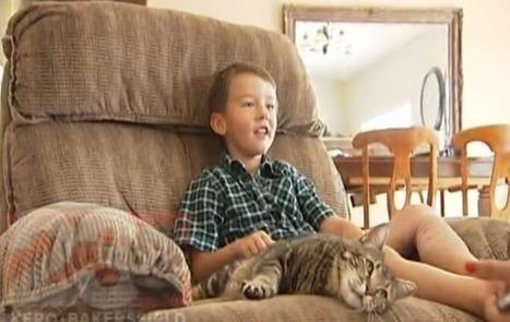 VIDEO. Un chat sauve un enfant. Voici la preuve que ces animaux ... - Le Nouvel Observateur | CaniCatNews-actualité | Scoop.it
