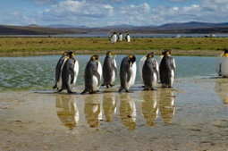 Risks to penguin populations analyzed | All about water, the oceans, environmental issues | Scoop.it