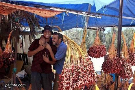 BEAUTIFUL PHOTOS | Harvesting Dates in Gaza | Occupied Palestine - In Photos | Scoop.it