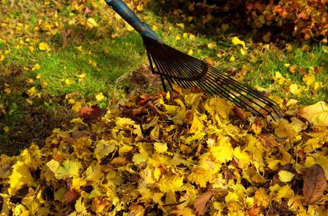 Capsule verte : Jardiner écolo, même l'automne   Les colocs du jardin   Scoop.it