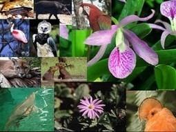 piden tratar a tráfico de flora y fauna como crimen en ... - Planeta Azul | Naturaleza | Scoop.it