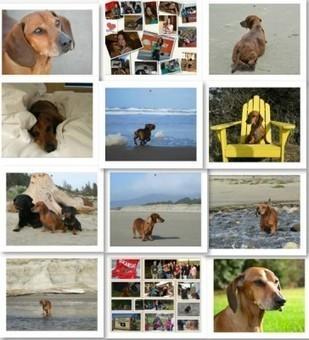臘腸狗減肥22公斤主人幫牠推勵志月曆 - 自由時報電子報 | 激勵感人 | Scoop.it