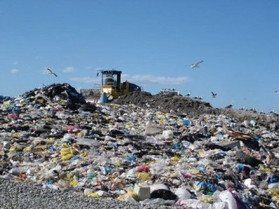 Plastic-Eating Mushrooms Could Clear up Persistent Garbage | Gadgets, Science & Technology | Technology | Scoop.it