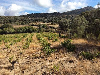 A Manifesto in favour of  Spain's unique vineyards | Vitabella Wine Daily Gossip | Scoop.it