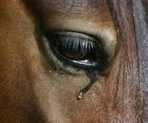 U.S. Senate: STOP HORSE SLAUGHTER | ~ADVOCATING FOR ALL ANIMALS~ | Scoop.it