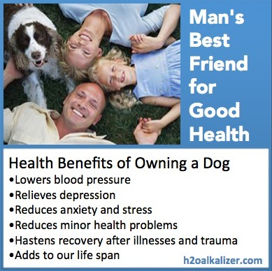 How dogs boost your health and longevity | The Basic Life | Scoop.it