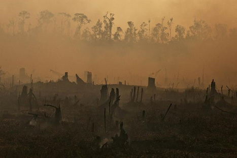 Greenpeace releases dramatic pictures of haze and fires in Indonesia (photos) | Nature Animals humankind | Scoop.it