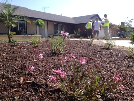Drought: 12 things to know about lawn replacement programs | Water Conservation for Lawn and Landscape | Scoop.it