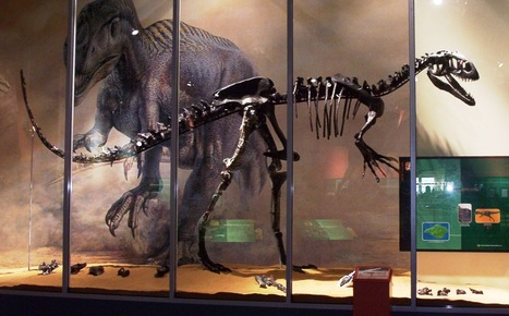 Isle of Fright – Europe's 'most dangerous' dinosaur once roamed the Isle of Wight | Geology News | Scoop.it