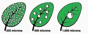 Fertilización Foliar - Smart! | buenas practicas agrícolas | Scoop.it