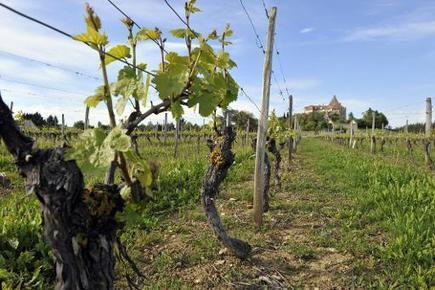 Le tourisme agroalimentaire en plein boom - La Voix du Nord | Marketing - Vins et spiritueux | Scoop.it