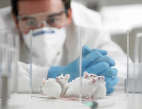 Logran rejuvenecer cerebros de ratones adultos | I didn't know it was impossible.. and I did it :-) - No sabia que era imposible.. y lo hice :-) | Scoop.it