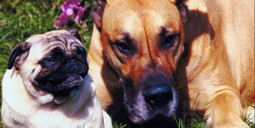 Avoid Giving Pets These Human Foods   Bone Appetite: Pet Time   Helping  Domestic Animals And Wildlife   Scoop.it