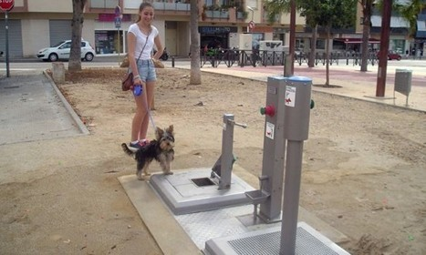 Spanish Town Installs World's First Public Toilet for Dogs | Strange days indeed... | Scoop.it