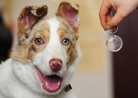 Compulsory microchips for all dogs in Scotland | Dogs | Scoop.it
