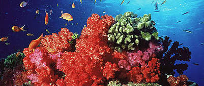Coral reefs – Nature's wonder – Do's and Don'ts - News - Bubblews   My Funny Africa.. Bushwhacker anecdotes   Scoop.it