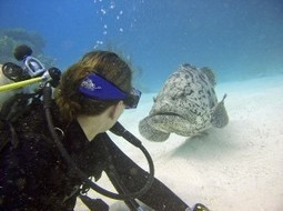 Diving in Europe: 10 Best Dive Sites - DIVE.in Scuba Magazine | DiverSync | Scoop.it