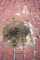 Don't Be Bugged Webinars Begin This Friday, Feb. 2 - Backyard Wisdom | Good Gardening News and Advice | Scoop.it