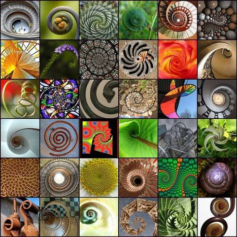 Nature's Art: Universal Spirals and Fibonacci | The Creative Commons | Scoop.it
