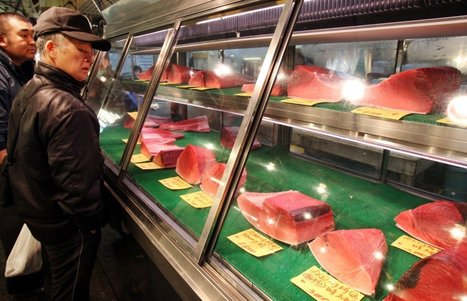 POLLUTION: How Can We Prevent Levels of Toxic Mercury in Tuna From Rising?   > Environmental   Scoop.it