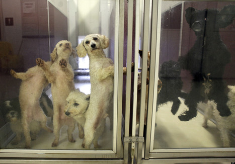 Buying Gifts For Dogs At Pet Stores Supports Puppy Mills | What you need to know about animal abuse in society today | Scoop.it