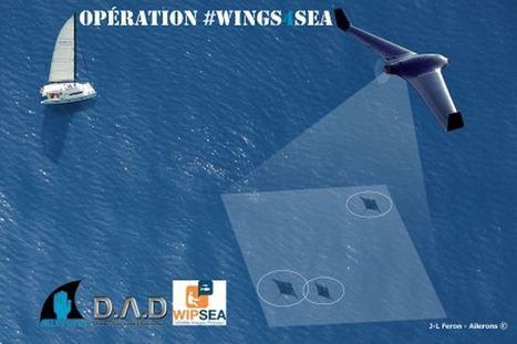 Objectifs | AILERONS Protection des requins et raies de Méditerranée | Rays' world - Le monde des raies | Scoop.it