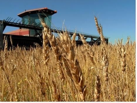 L'Agriculture écologiquement intensive : nature et défis | AGRONOMIE VEGETAL | Scoop.it