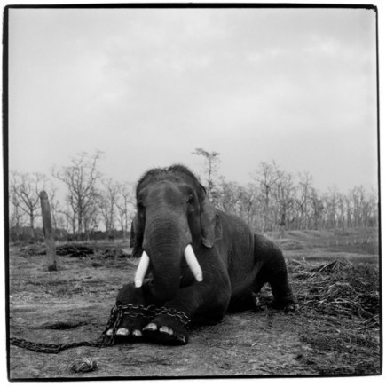 Photojournalist Patrick Brown On a Decade of Documenting Illegal Wildlife Trade | Wildlife Trafficking: Who Does it? Allows it? | Scoop.it