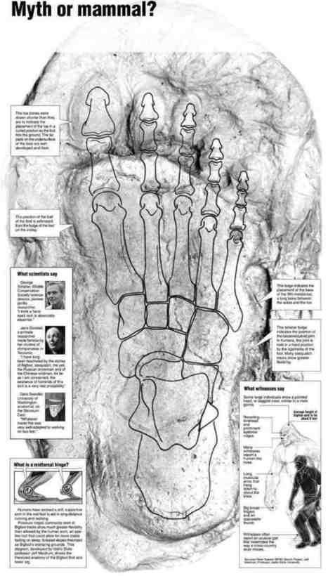 Bigfoot Believers | Bigfoot Mythbusted | Scoop.it