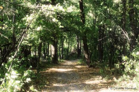 Enchanted path | Social Media | Scoop.it
