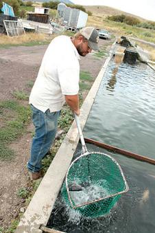 Farmers raise warm-water tilapia in cool SE Idaho - Idaho State Journal | Tilapia | Scoop.it