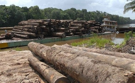 Disaster looms if loss of Amazon rainforest continues - Climate News Network | Rainforests - Global environments | Scoop.it