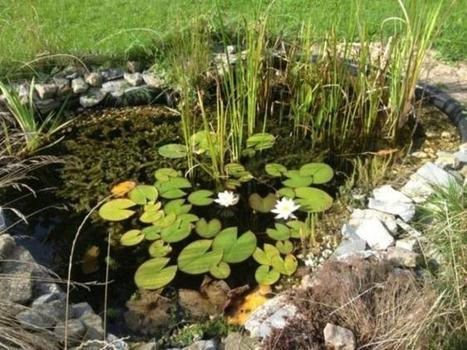 Le jardin naturel (7) | Jardin écologique | Scoop.it
